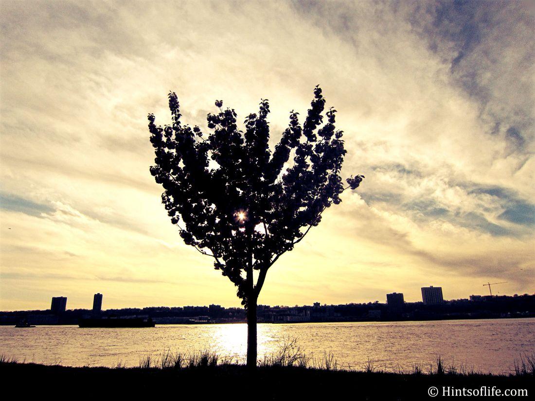 Sunset_cherryblossom