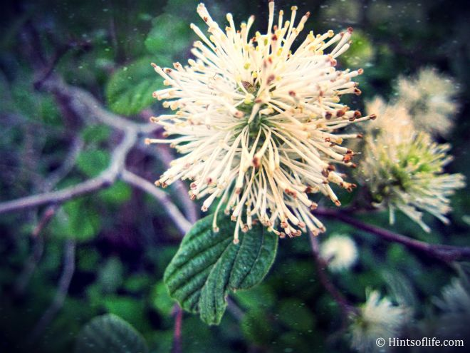 Flower@CentralPark_copy