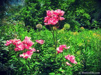 Shakespeare Garden_2