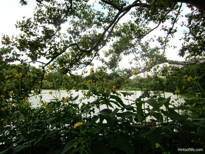 The Lake_Flowers