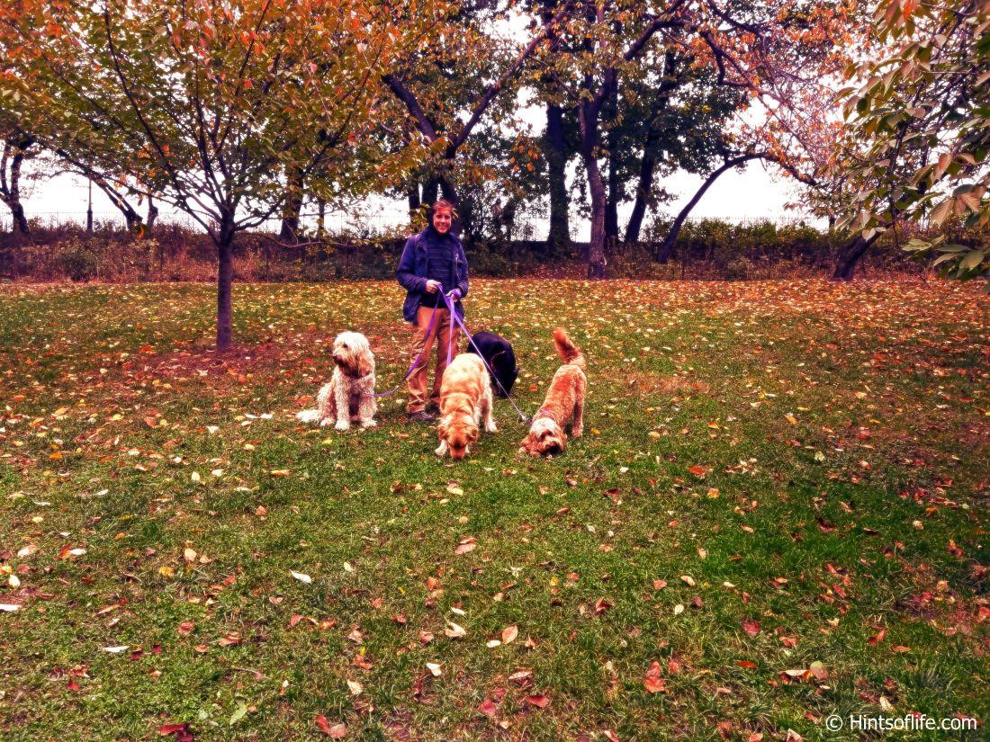Central Park._Fall colors_landscape._