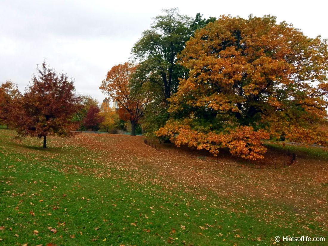 Central Park._Fall colors_landscape