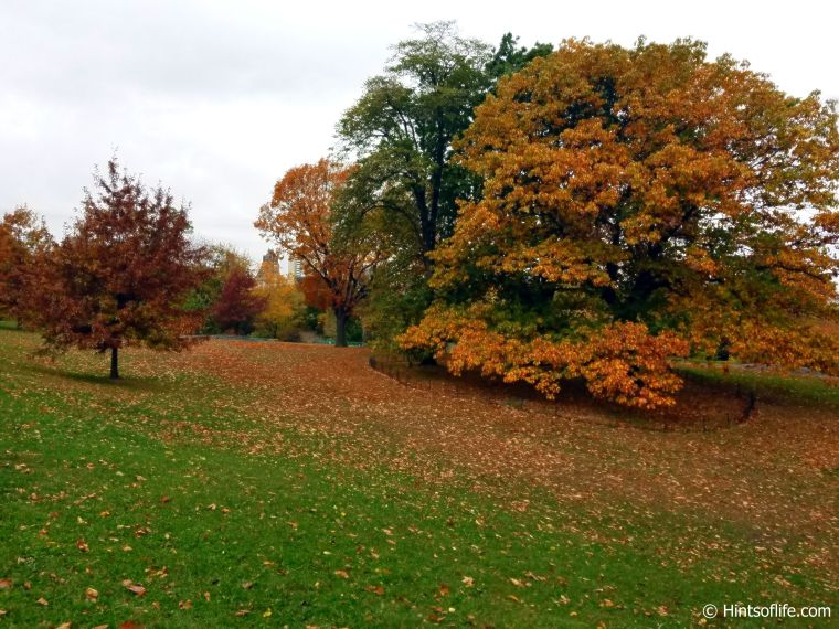 Central Park._Fall colors_landscape