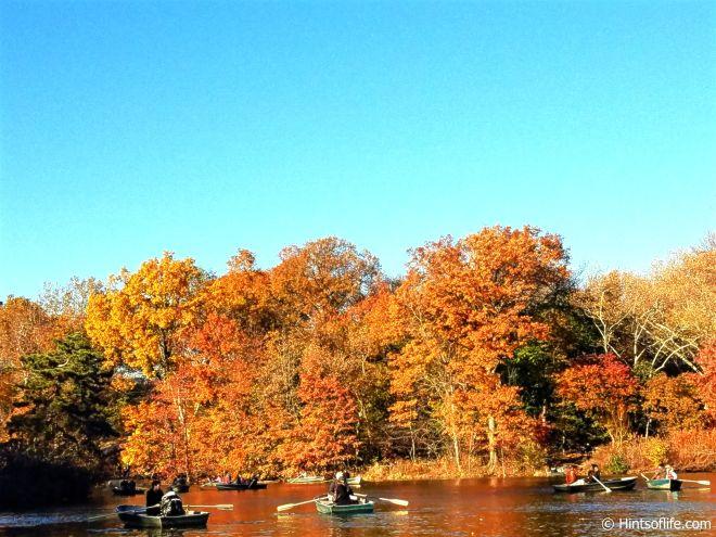 Last glimpse of November_The Lake_Central Park.
