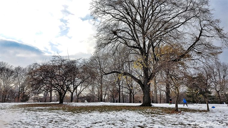 Central Park_First Snow_Winter....