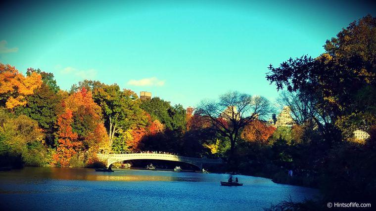 Fallcolors2018_Fall_CentralPark_NewYork._
