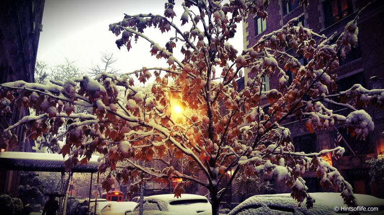 First Snow_New York_