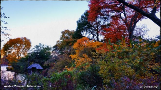 Wordless Wednesday_Fall_Nature's color_CentralPark