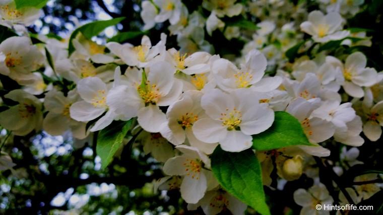 Start Magnolia_CentralPark_EastPark