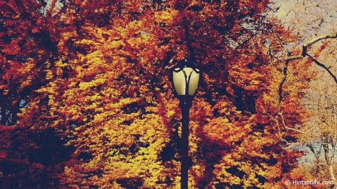 The Lamp_Central Park_Fall_Fallcolors_Fall2019